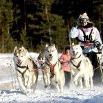 ВКрасногорске пройдет Зимняя гонка «Пушистых лапок»